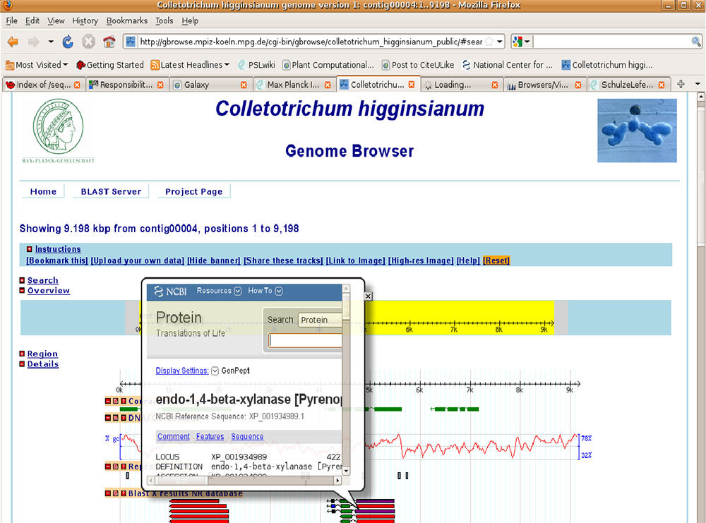 Figure 1) Screenshot of the Colletotrichum higginsianum. Genome browser.
