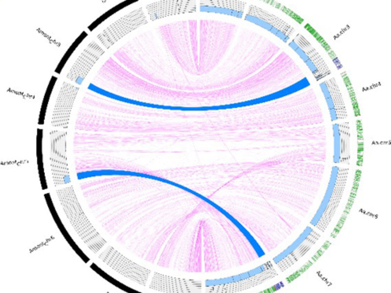 Resequencing of introgression lines carrying segments of the annual A. montbretiana genome in perennial A. alpina. Two segments (blue arcs) of the A. montbretiana genome (black outer ring) are present in the A. alpina genome (green outer ring) and were delimited by Illumina resequencing.
